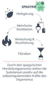 die 4 Schritte des Herstellungsprozess der Spagyrik: Hefegärung, Destillation, Veraschung, Filtration