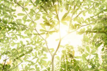 Sonne die durch Dach eines Baums scheint