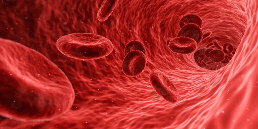 Nahaufnahme von Blutzellen (rot) - Nosoden - Nosodentherapie